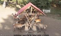 Kunduz Dağı'ndaki Geyik Üretim Merkezi